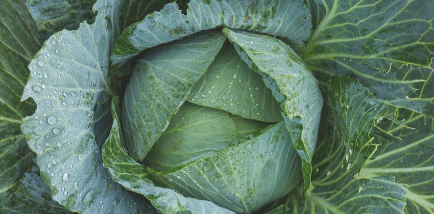 بهترین سبزیجات با کربوهیدرات پایین