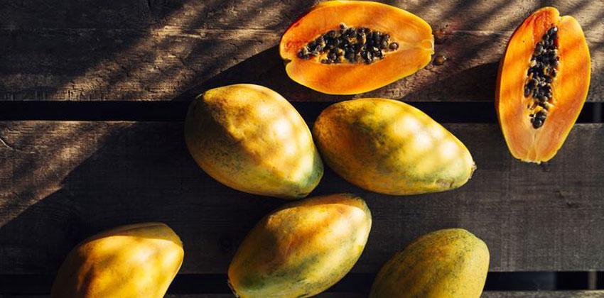 میوه های لوکارب